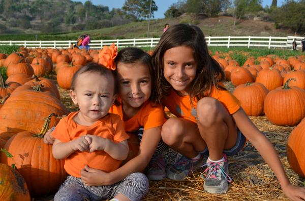 blog_pumpkinpatch3