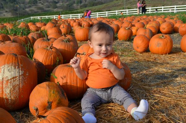 blog_pumpkinpatch4