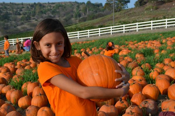 blog_pumpkinpatch5