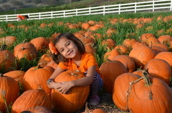 blog_pumpkinpatch7